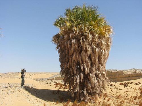 Palma zagrożony gatunek